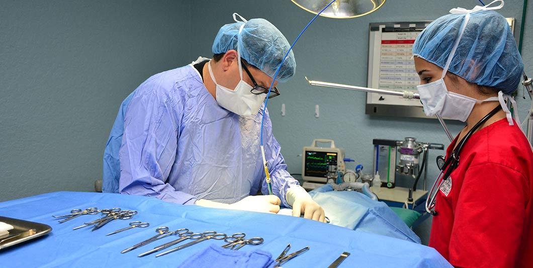 pet-laser-surgery