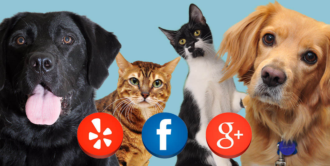 Jupiter Animal Hospital Online Reviews