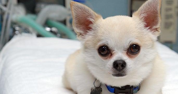 pet-resources-educationallinks