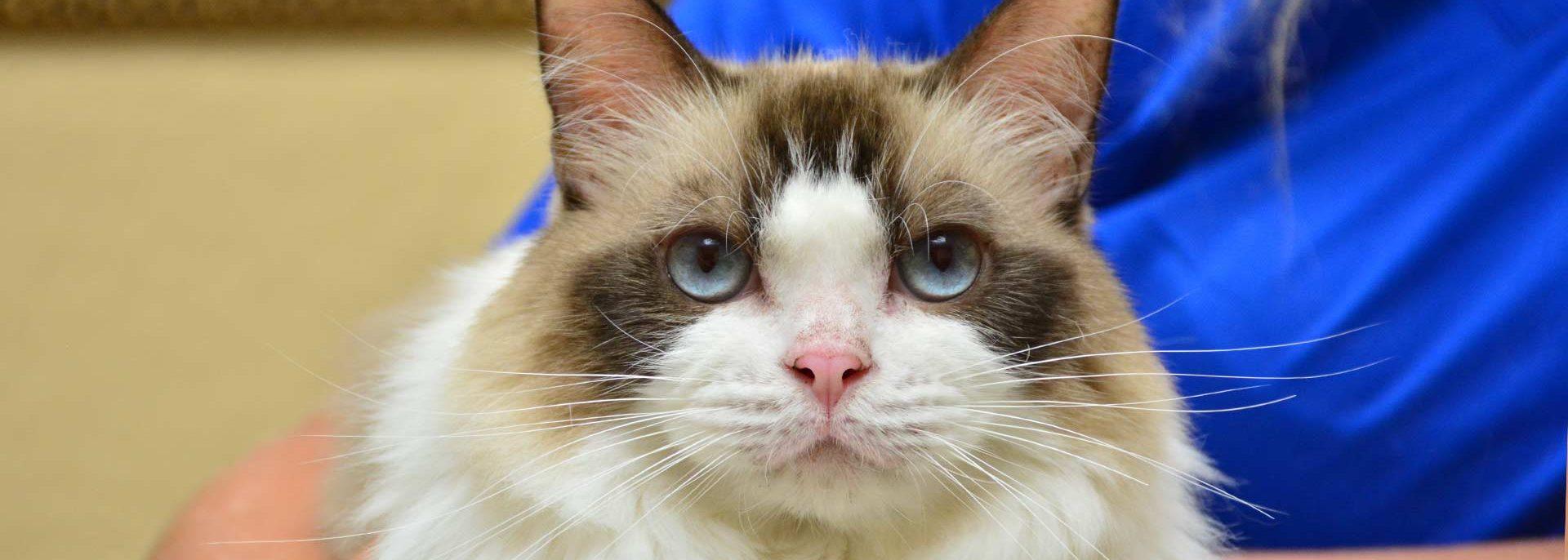 Feline Veterinary Care