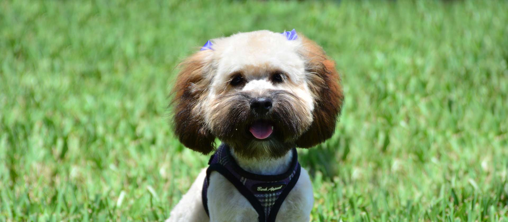 Preferred Dog Veterinarian in Jupiter, Palm Beach County FL