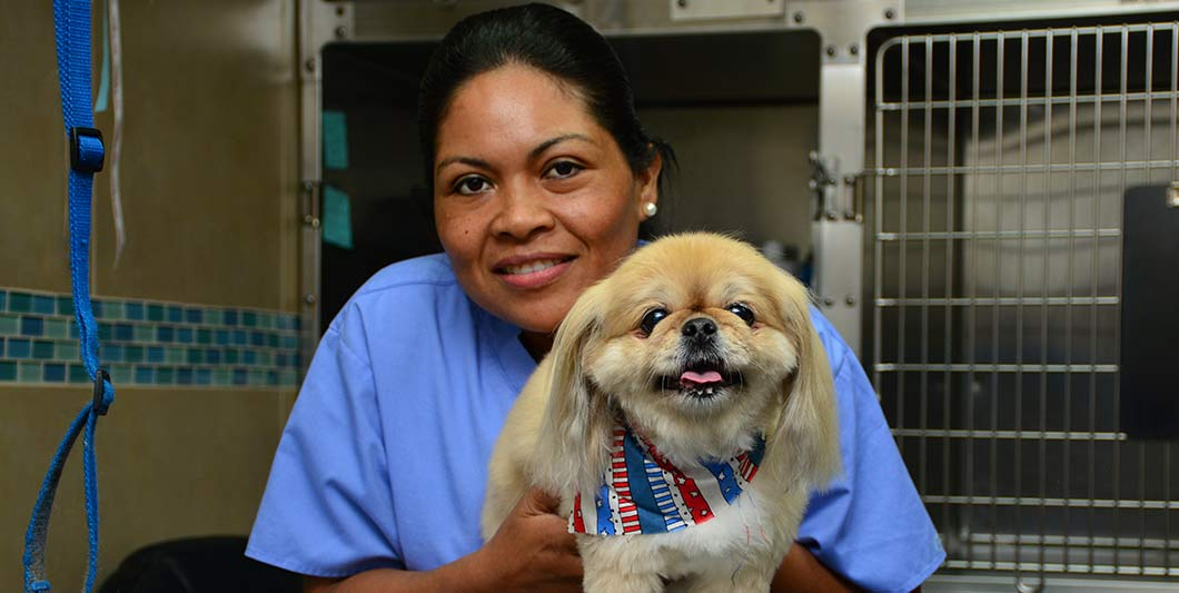 Dog Groomer in Jupiter FL